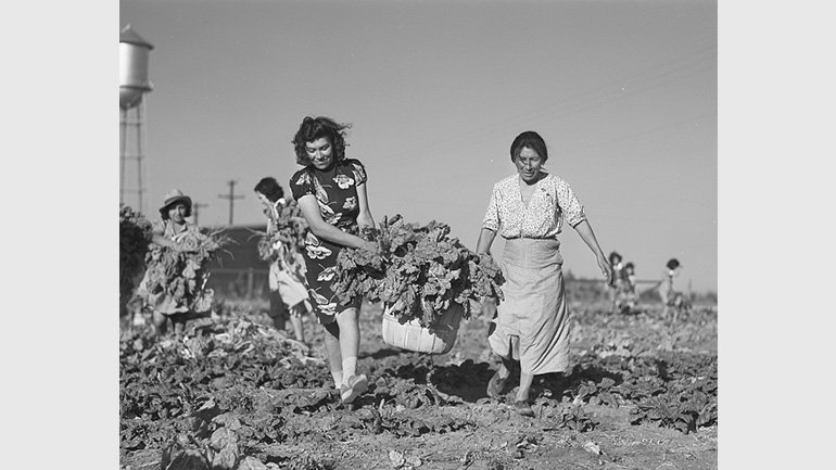 Arthur Rothstein, Harvesting spinach crop. Community garden, Robstown, Texas. FSA (Farm Security Administration) camp, 1942,  Library of Congress Prints and Photographs Division [P&P]
